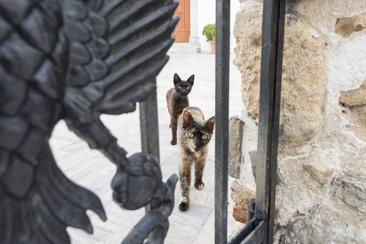 greek island cats 2