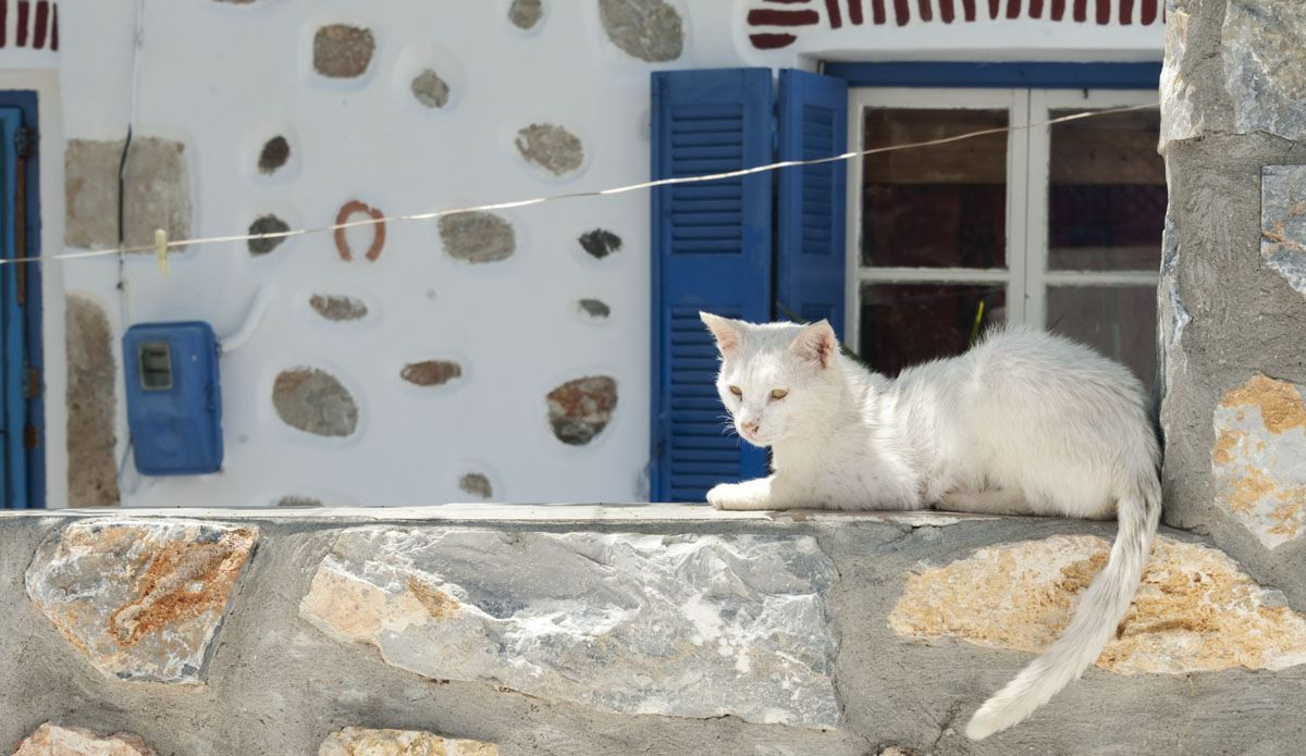 white cat window greek islands