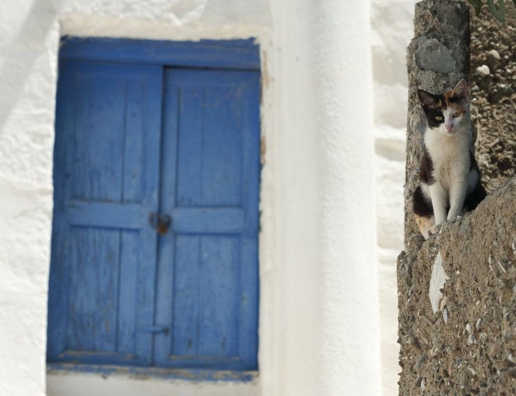 cat window greek islands