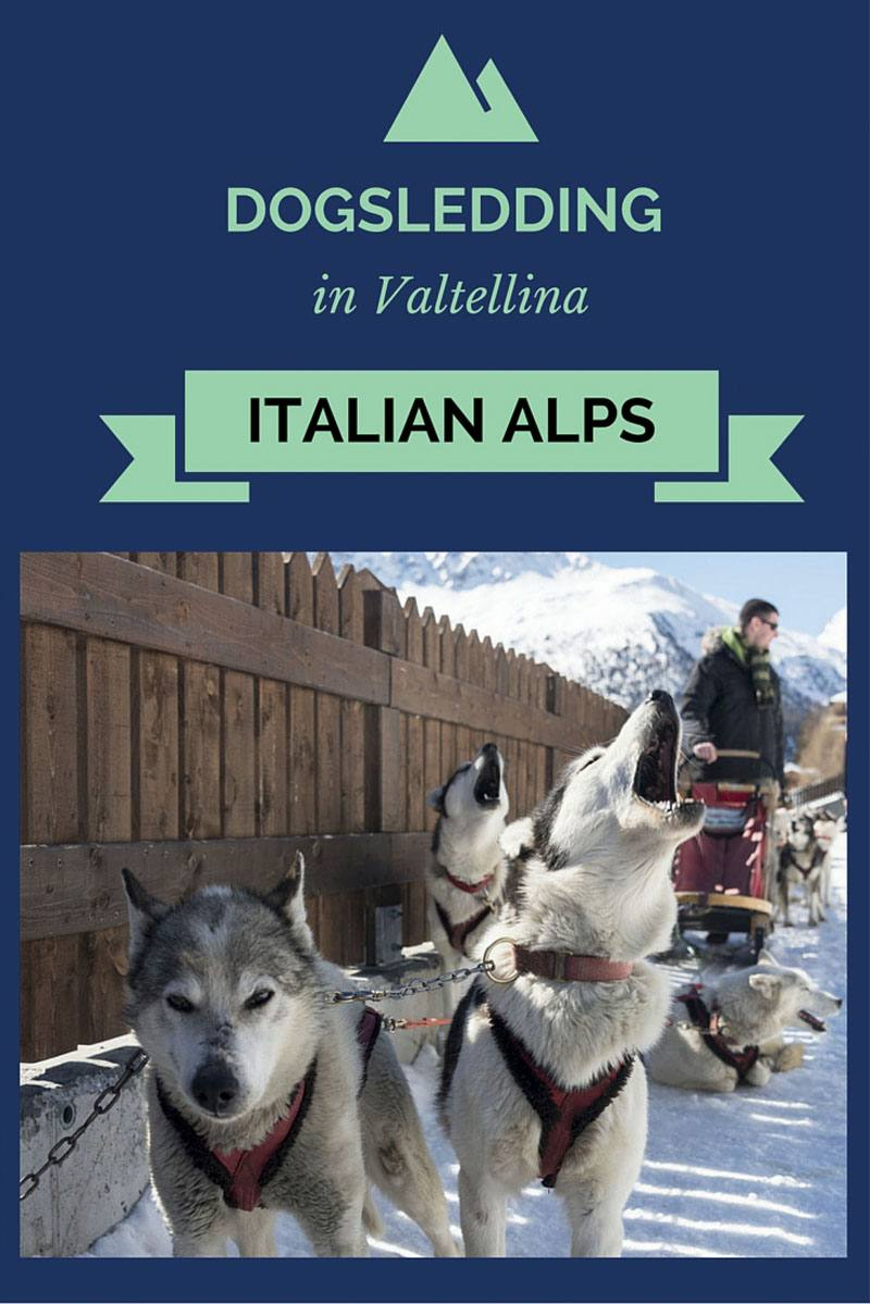 dogsledding lombardy alps pin