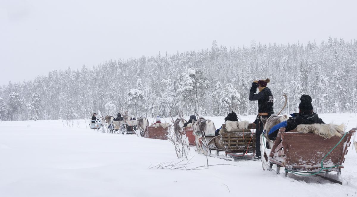 salla reindeer farm safari finland