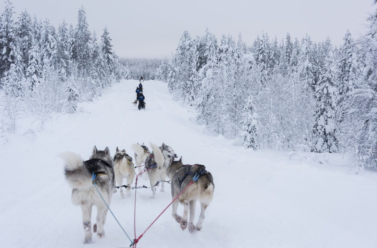 salla finland dogsledding snow