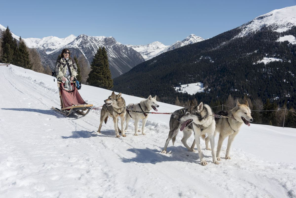 arnoga husky village dogsledding