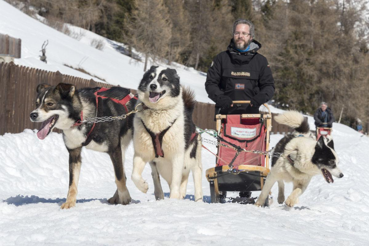 Valtellina dogsled 3 dogs