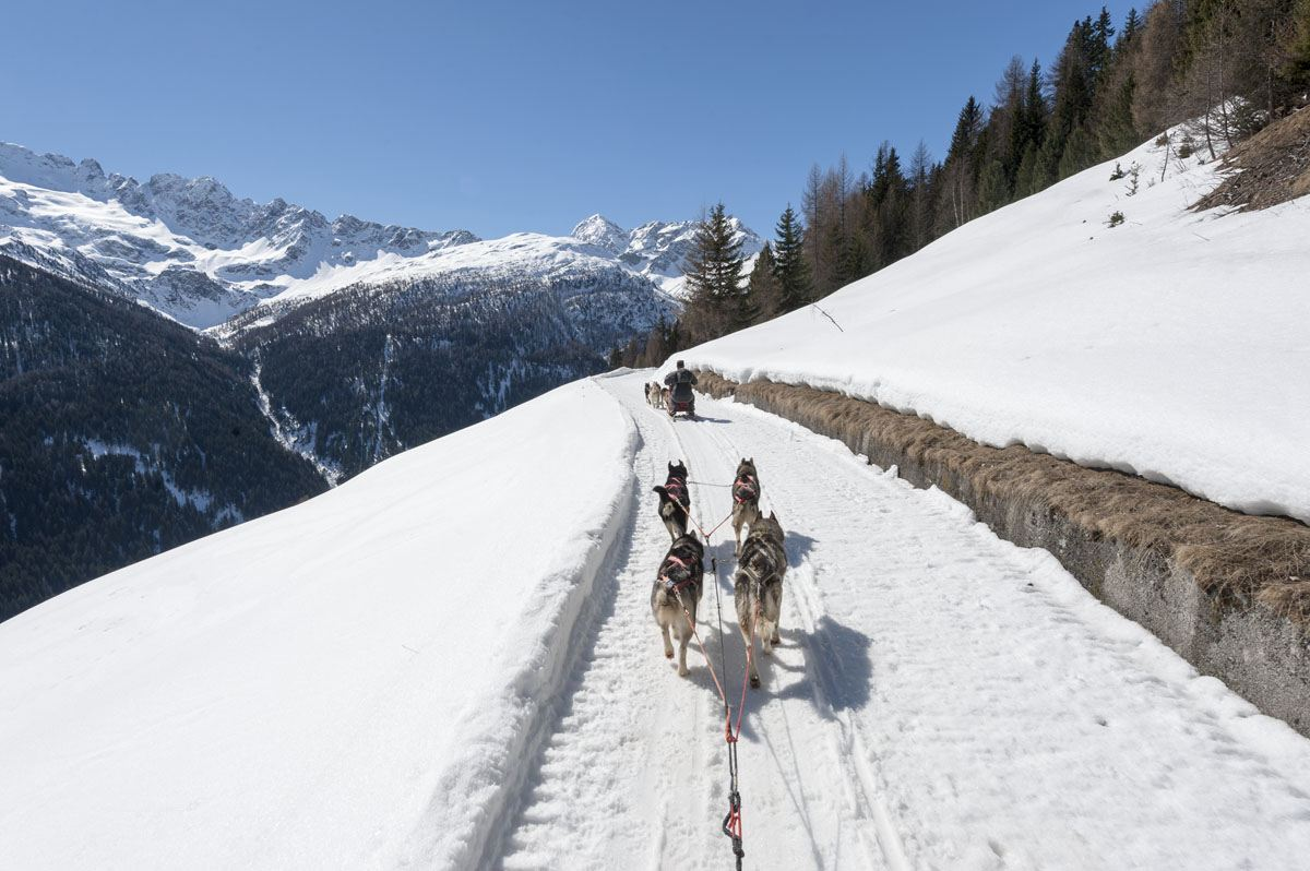 valtellina italy dog sledding