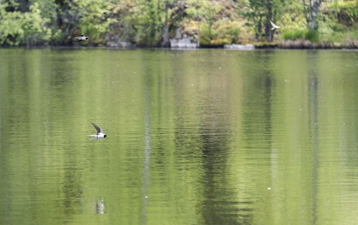 birds lake helsinki
