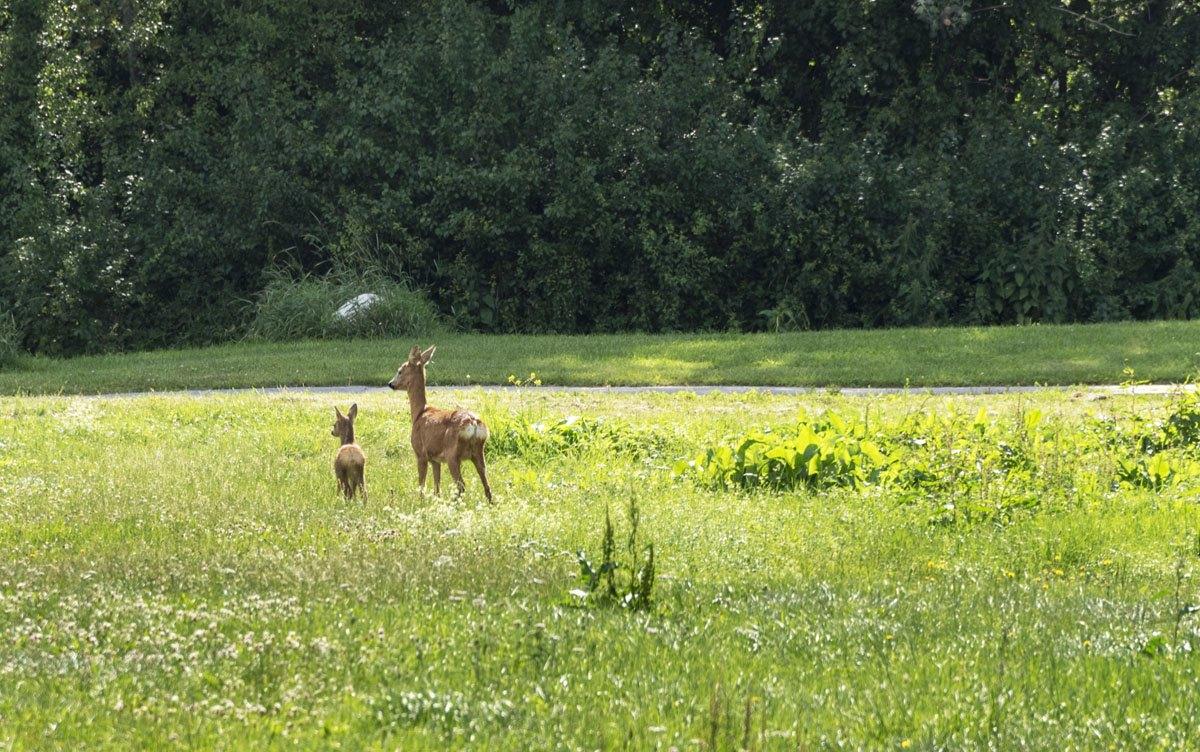 green stockholm deer family
