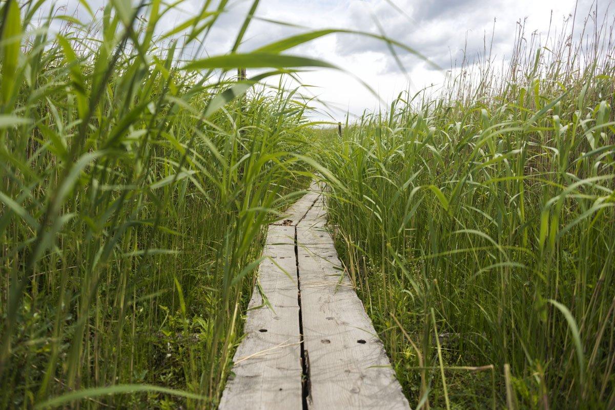 lammasaari boardwalk reeds