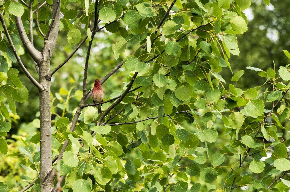 lammasaari rare bird