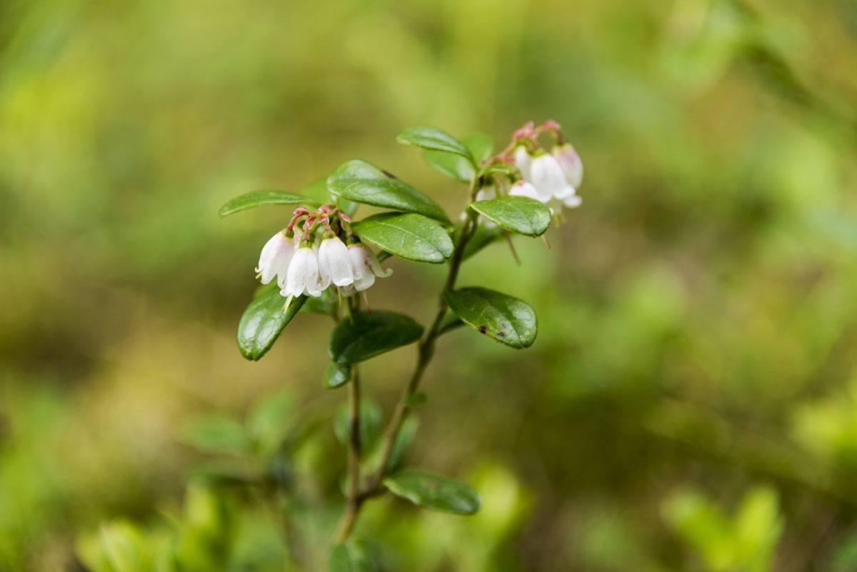 nuuksio mini plant