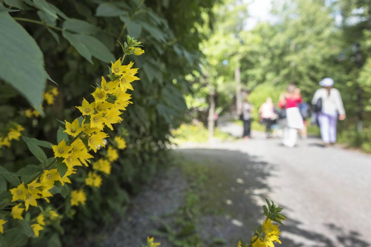 stockholm eco village flowers