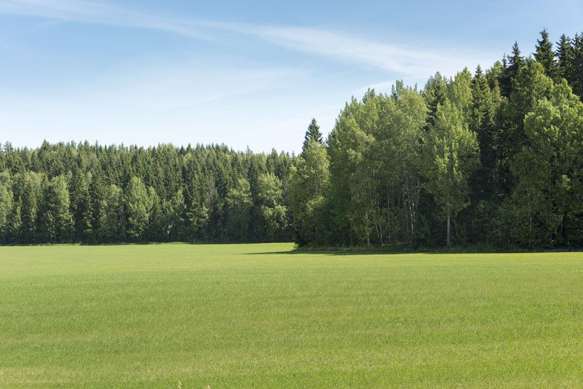 vihti finland green meadow