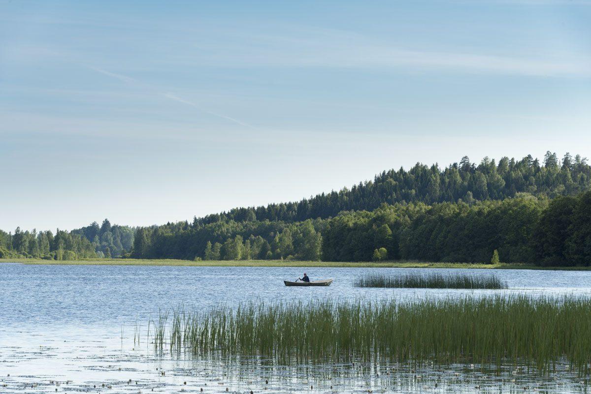 vihti finland lake reeds