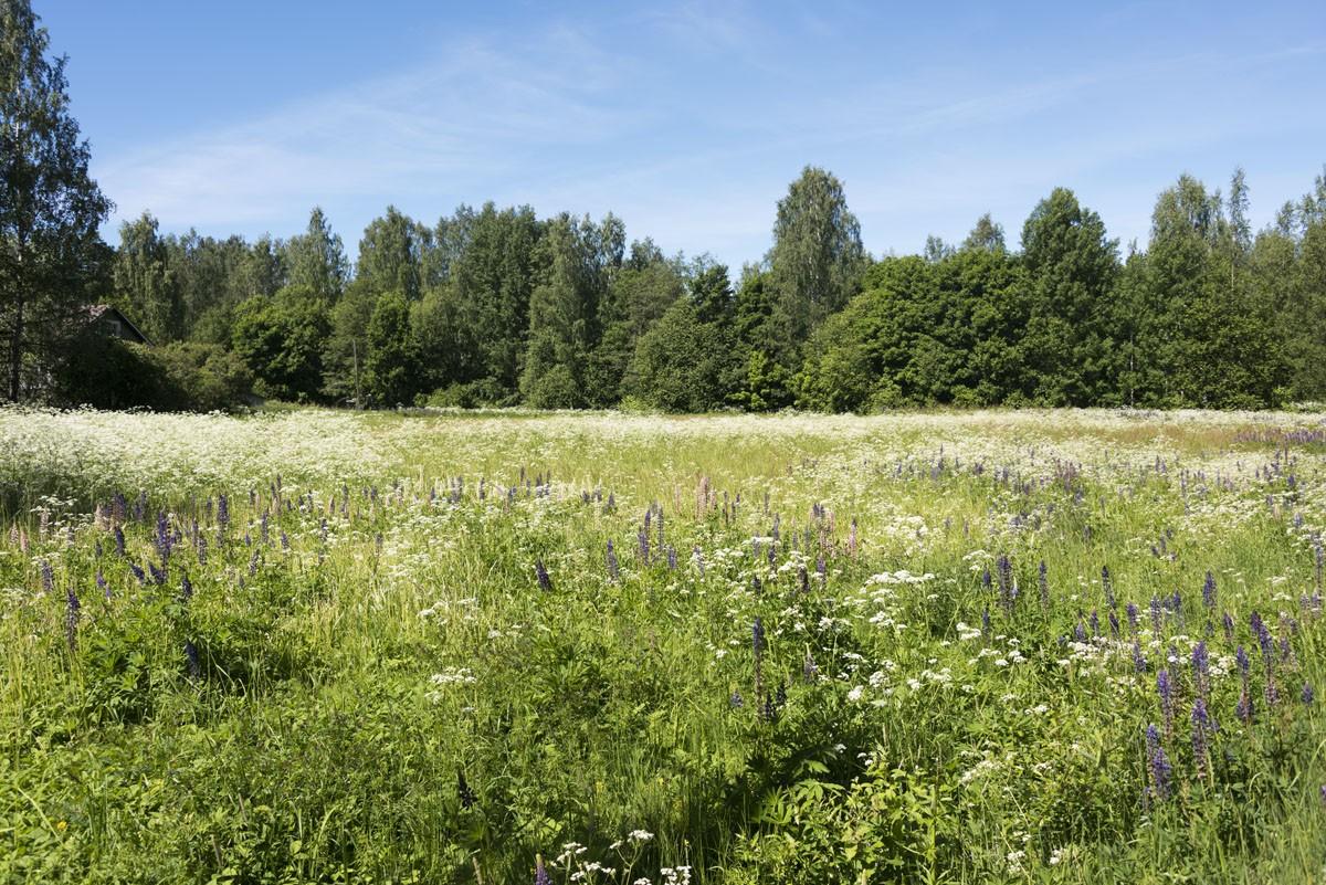 vihti to lohja wildflowers