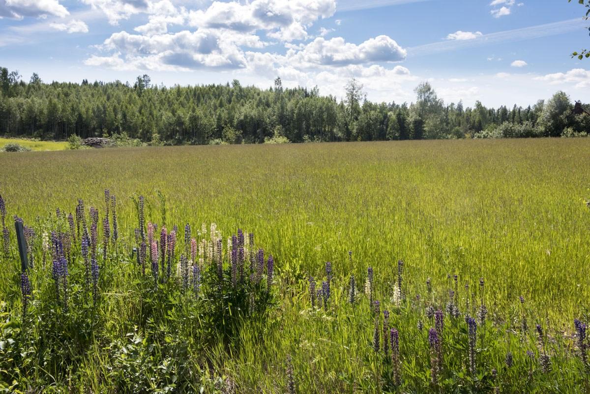 visit lohja to vihti wildflowers
