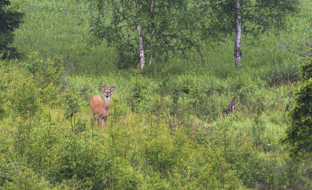fiskars-mustionlinna-deer