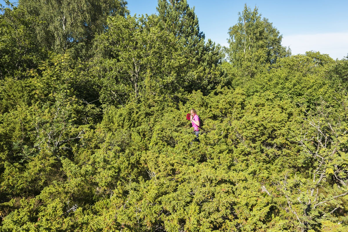 lappo-aland-trees