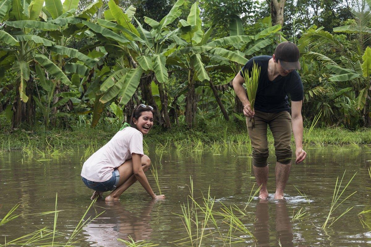 pentingsari-village-planting-rice