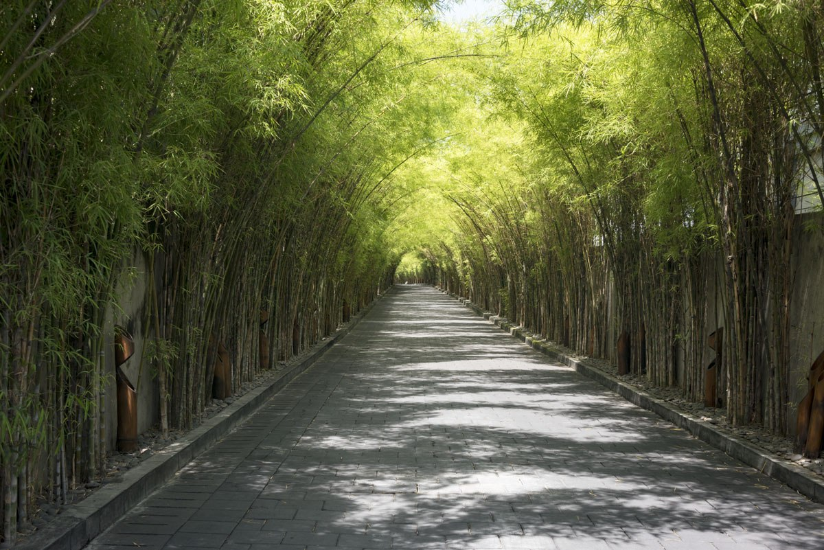 bamboo forest penglipuran walk