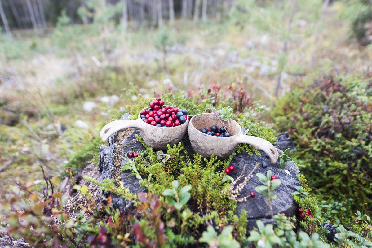 stopover-finland-kuusamo-berries