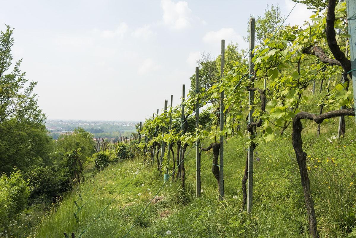 moscato di scanzo winery