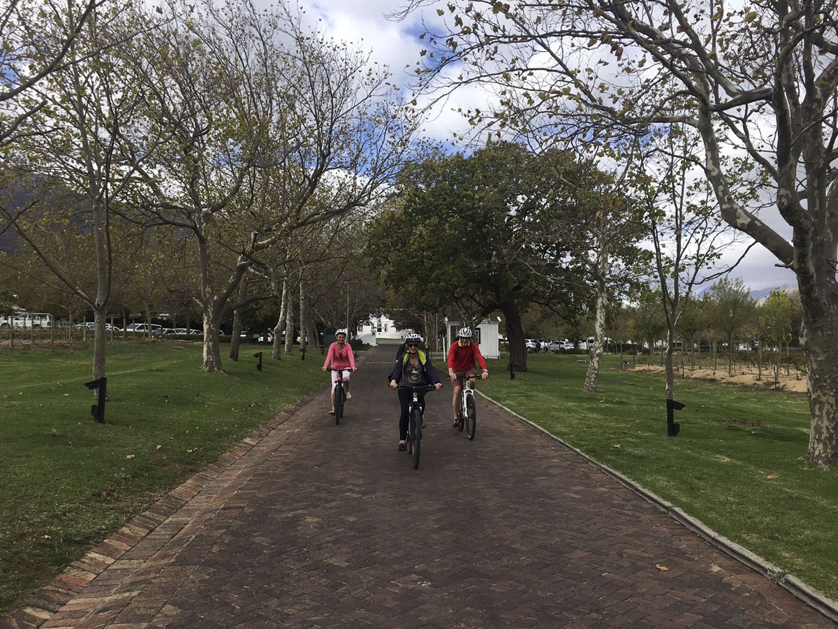 visit stellenbosch wine bike tour