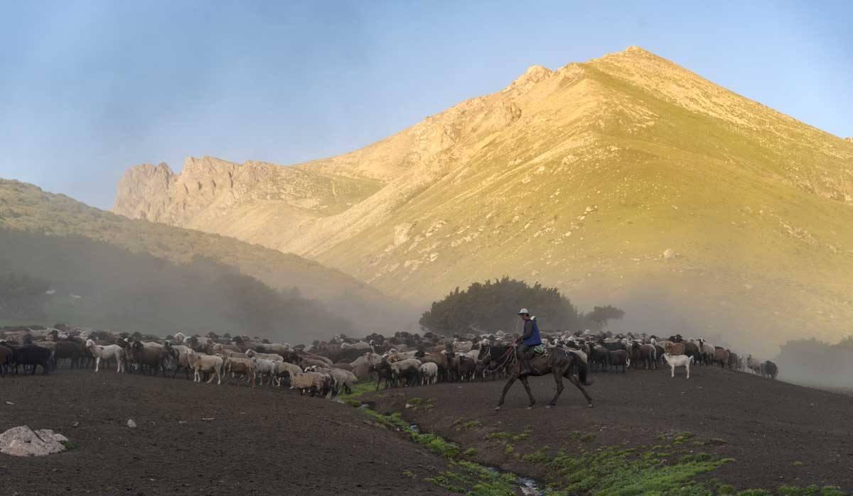 flocks sunset kyrgyzstan