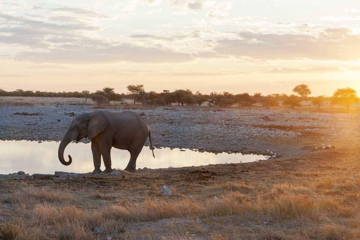 namibia okakukuejo waterhole