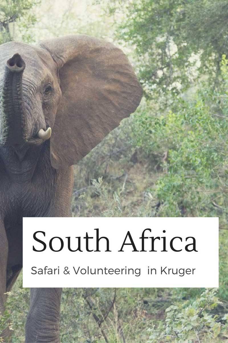 south africa safari pin 2