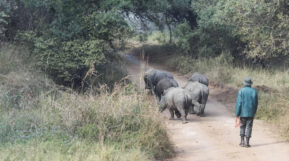 care for wild africa rhino keepers