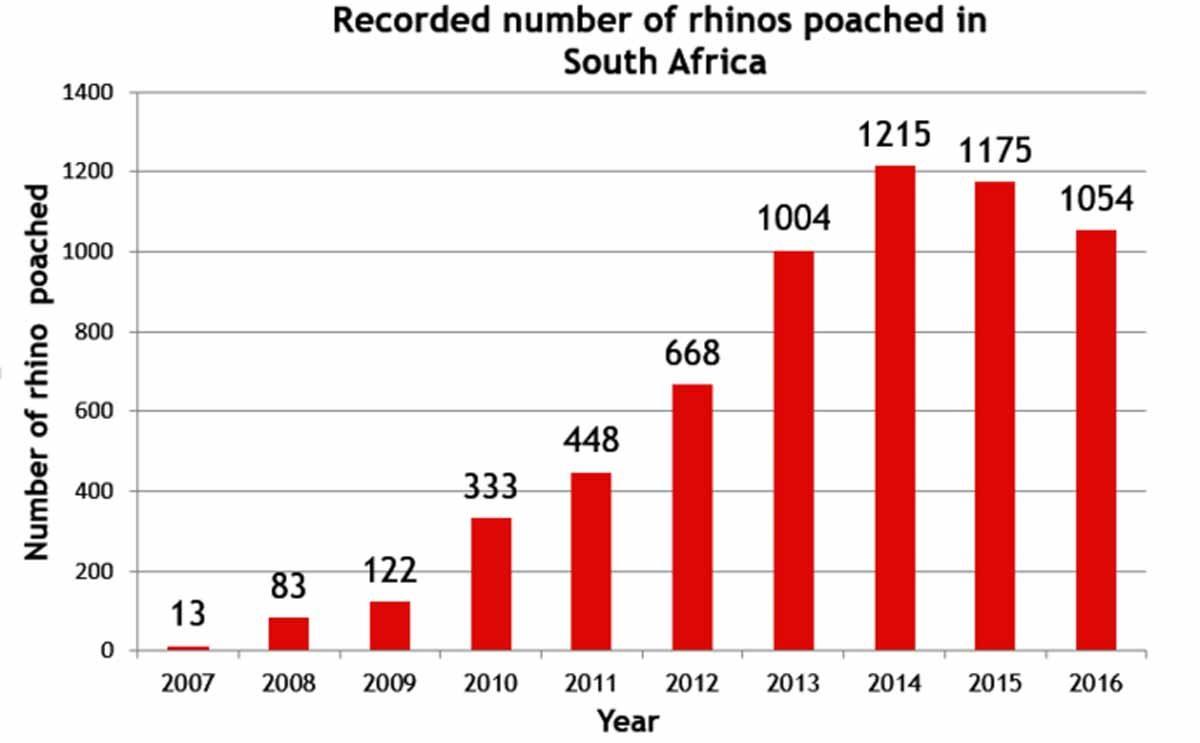 poached rhino statistics