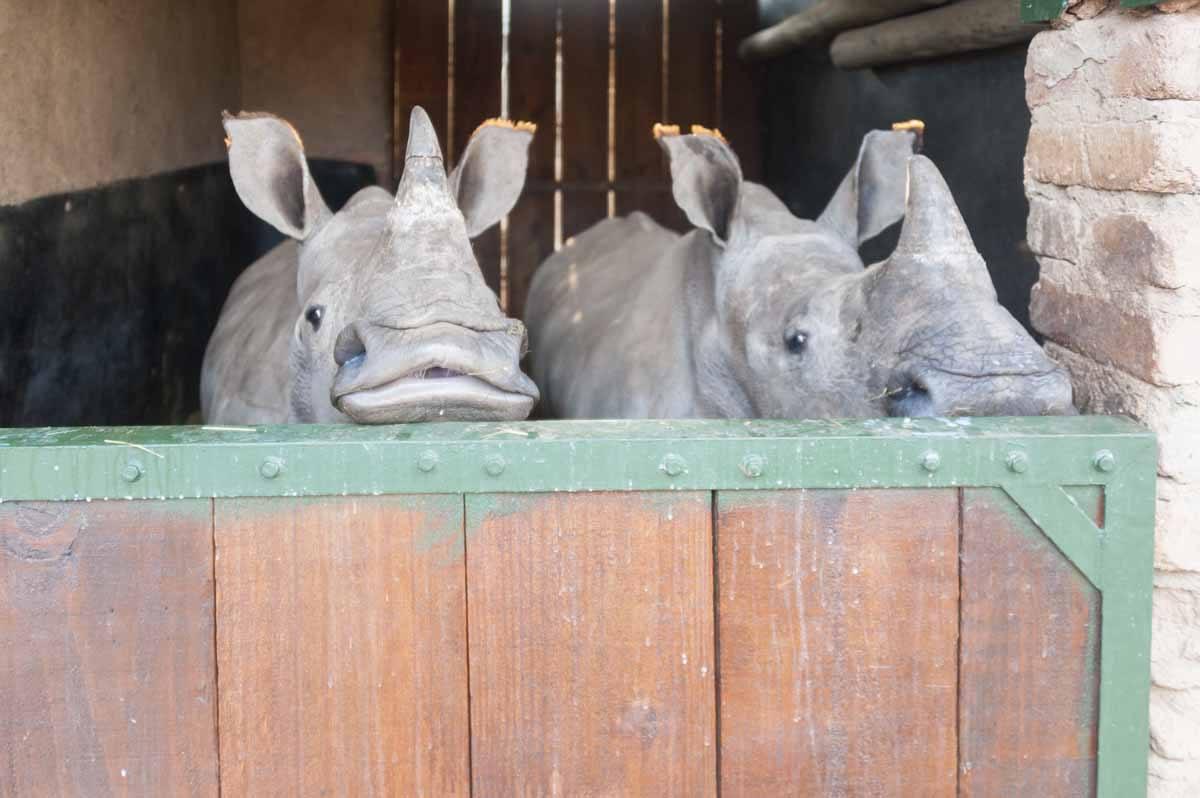 rhino sanctuary babies