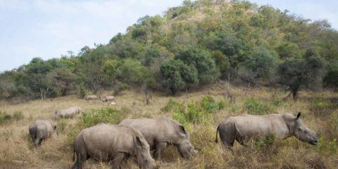 rhino sanctuary care for wild africa