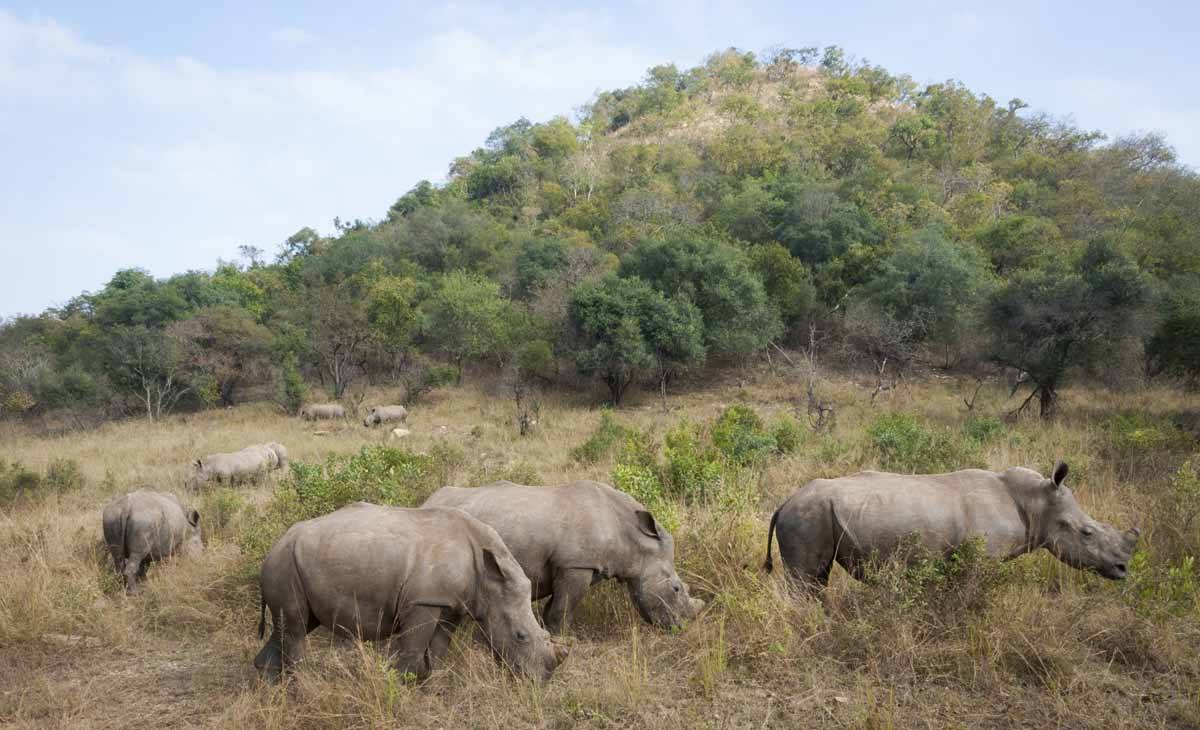 rhino sanctuary care for wild africa