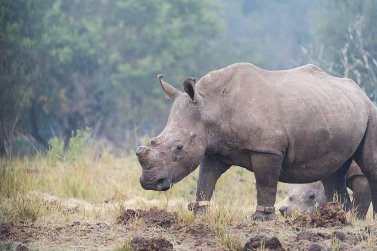 rhino sanctuary south africa