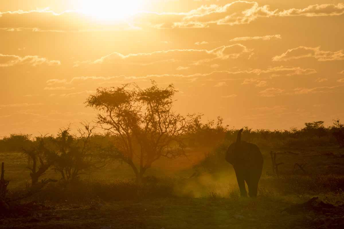 elephant sunset okaukuejo