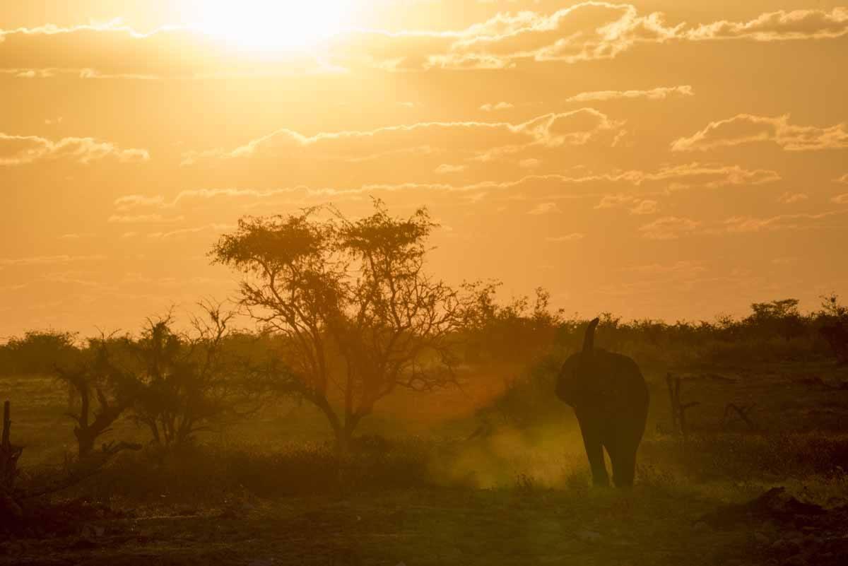 elephant sunset okaukuejo