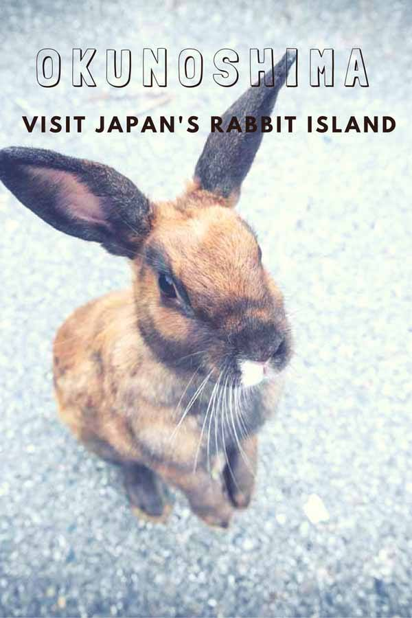 rabbit island pin