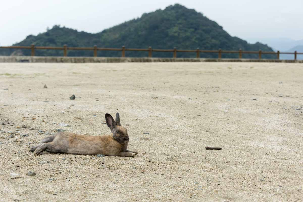 rabbit relaxing on beach japan