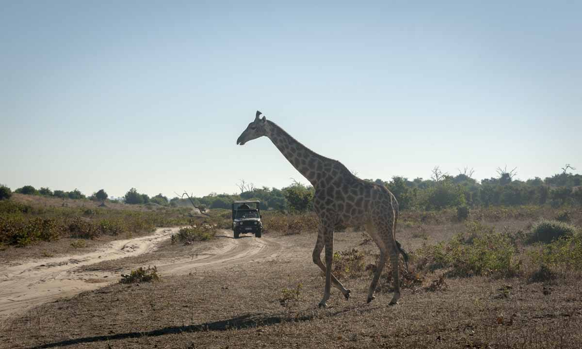 things to do in botswana safari