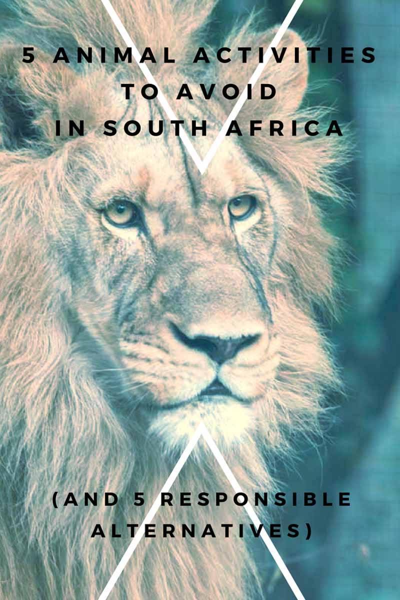 africa animal activities pin
