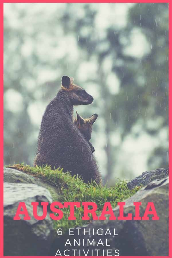australia ethical animal activity pin