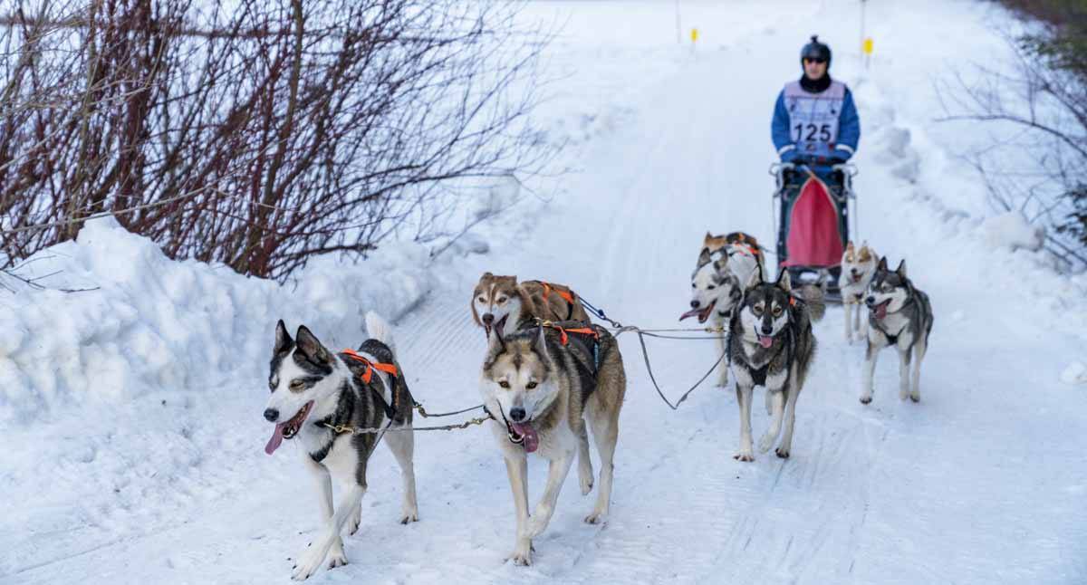 dogsledding pillerseetal austr