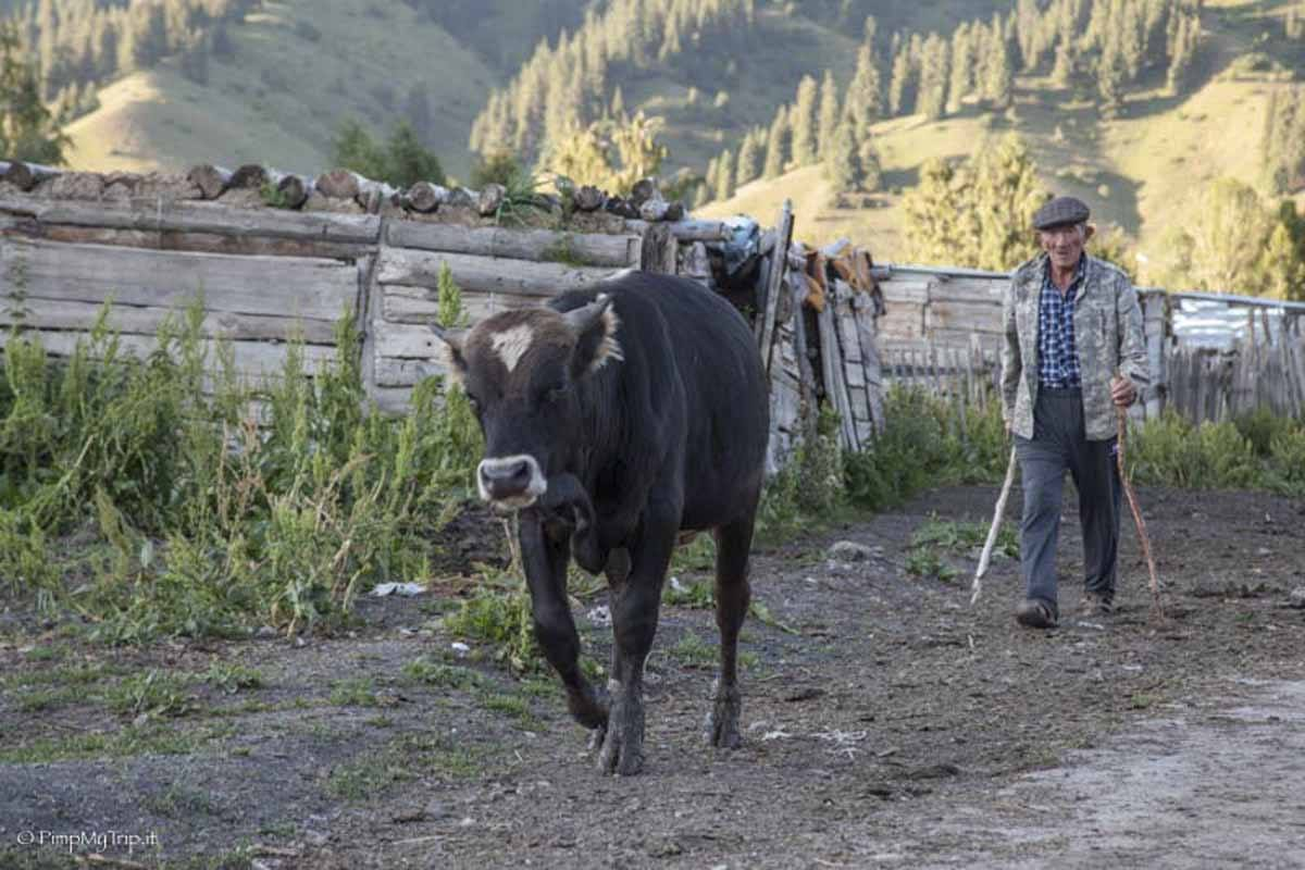 jyrgalan herder