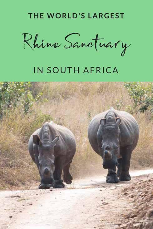 rhino pin 1