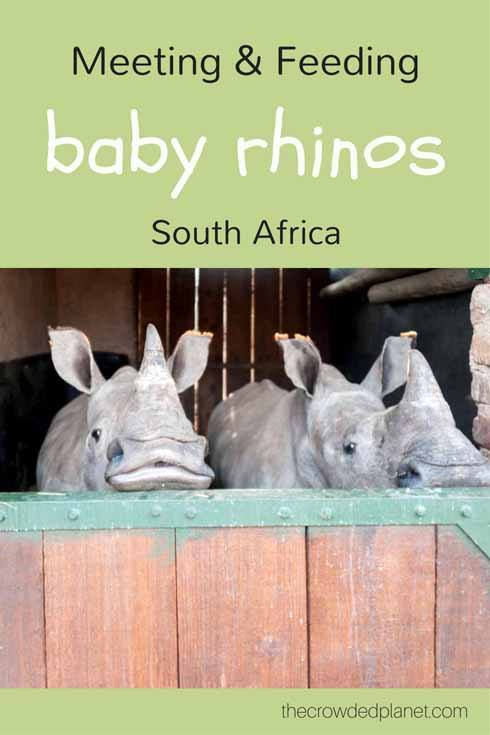 rhino pin 2