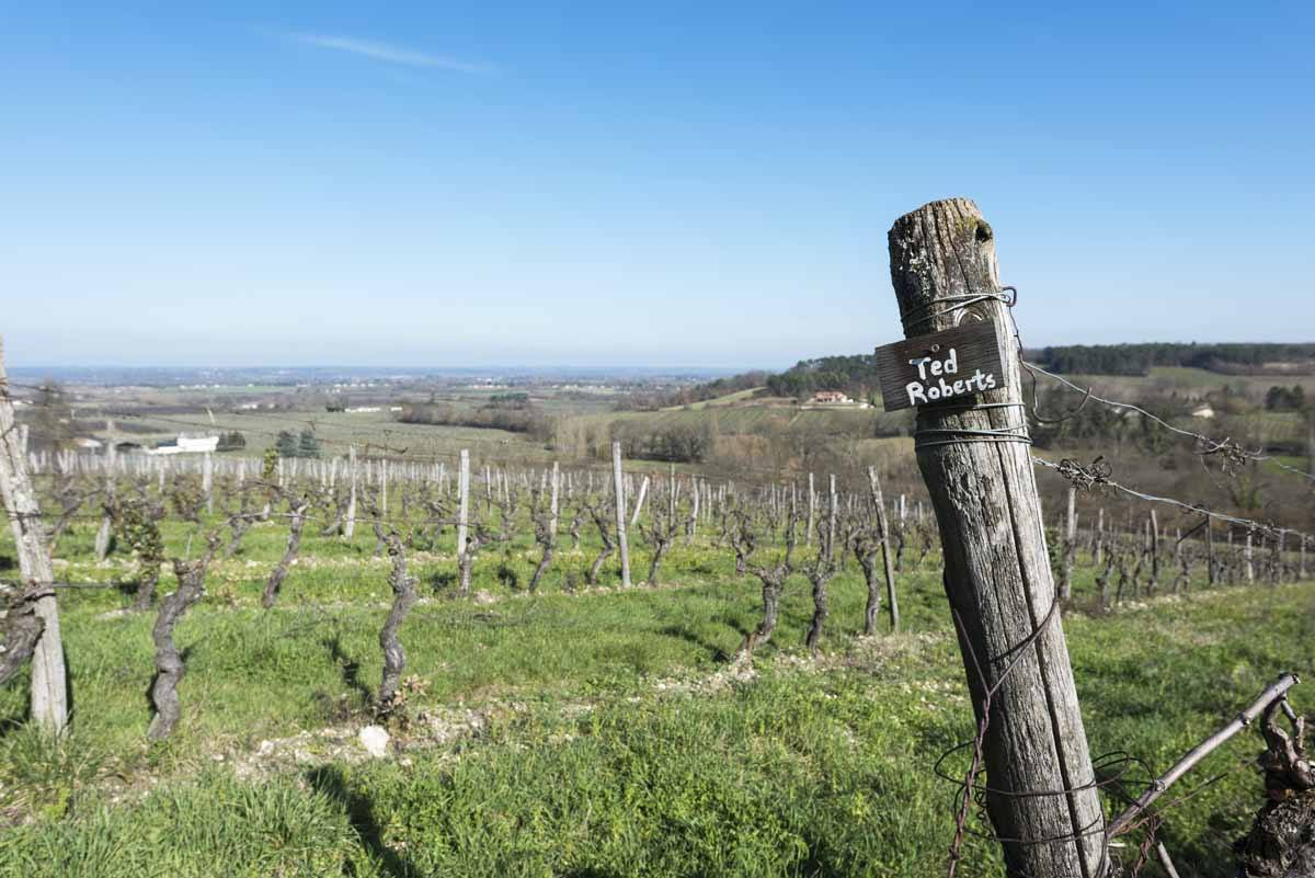feely winery