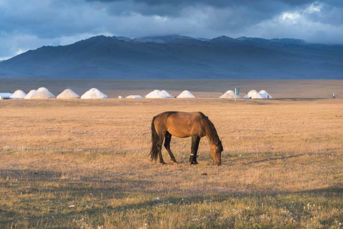 things to do in kyrgyzstan horse son kol