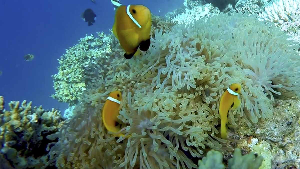 alor scuba diving
