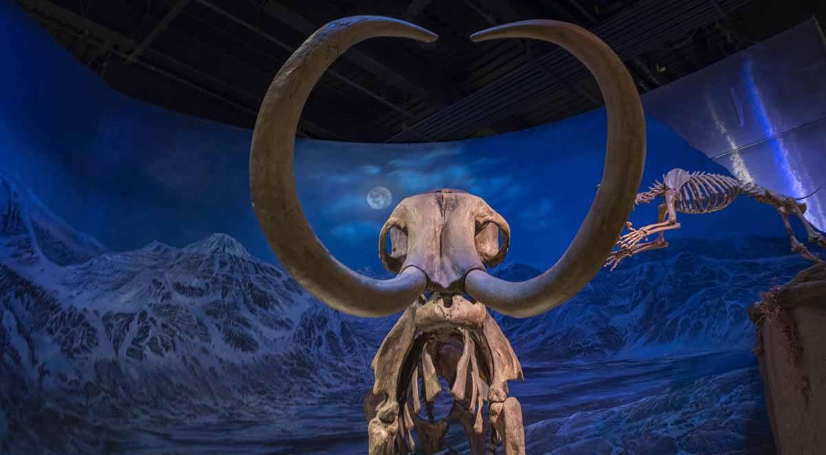 cretaceous alberta royal tyrell museum